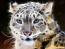 avatar_Compaqsurfer