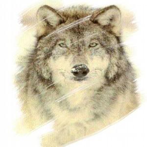 avatar_WolfReverse