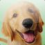 avatar_baconsniffer