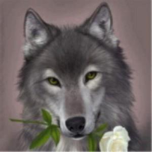 avatar_dalanx