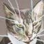 avatar_dataplex