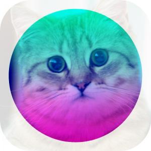avatar_foxweb