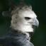 avatar_nate451