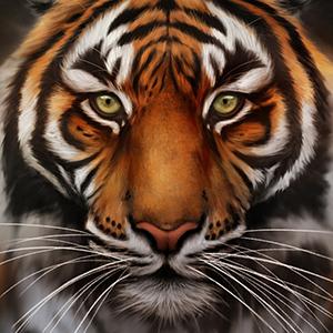 avatar_tigerbomb8