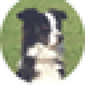 avatar_tkbyd